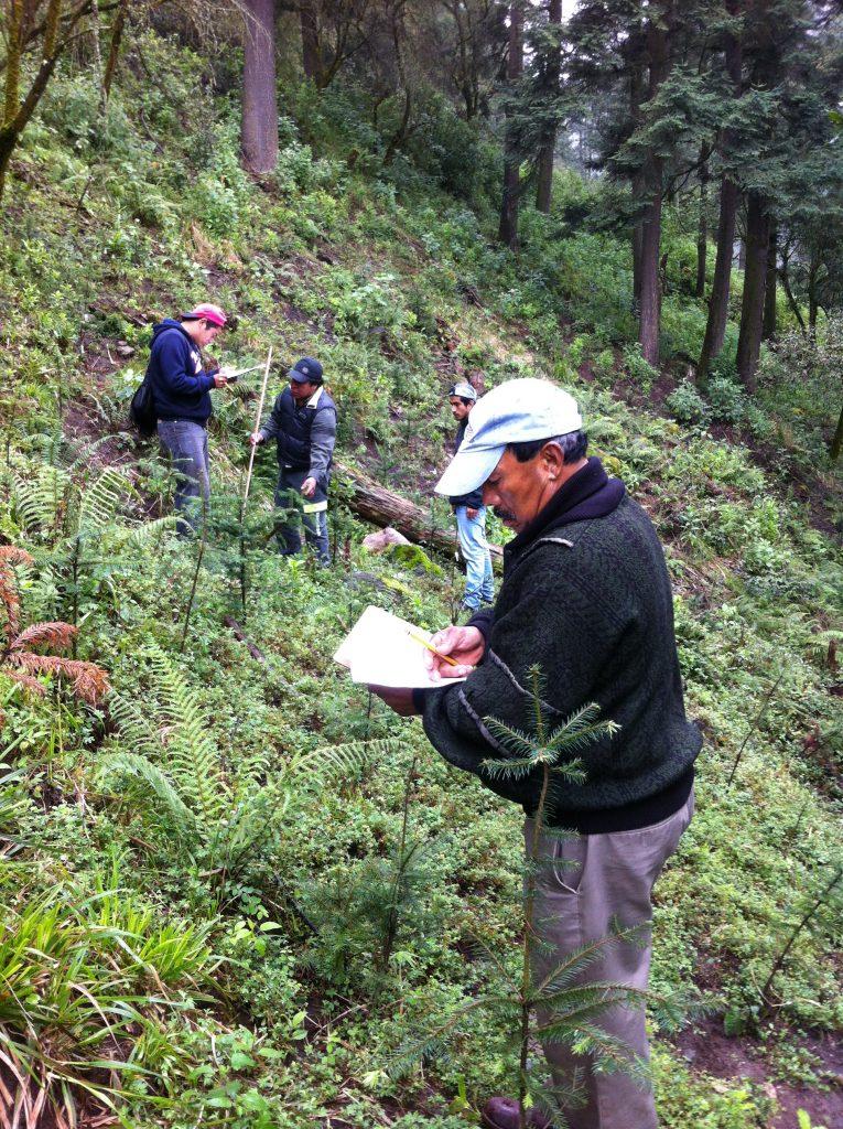 En primer plano vemos los arbolitos de Abies religiosa monitoreados, con uno de los monitores registrando los datos en papel, en segundo plano tres monitores tomando la altura del arbolito y tomando los datos, y al fondo el bosque.
